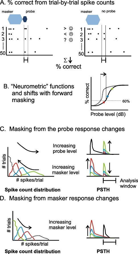 The SDT based method for analysing neural responses. A Deriving the percentage of correct detections from trial-by-trial spike count comparisons. Left panel shows a set of trials in which the probe was presented. Right panel shows a set of trials in which no probe was presented. Greater than symbol indicates a trial in which there were more spikes in the probe condition (correct detection); less than symbol indicates a trial in which there were more spikes in the no-probe condition (so an incorrect decision is made); question mark indicates a trial in which spike counts were equal, so a guess was made. B A 'neurometric function' describes the percentage of correct responses as a function of probe level, from which a threshold (here we use a 60% criterion—see 'Results') is derived. A shift in the neurometric function on addition of a masker produces a shift in the threshold (masking). C and D The SDT method described in terms of spike count distributions. CLeft panel shows a set of spike count distributions from within the indicated analysis window when there is a probe (coloured lines) and when there is not (dashed line). Right panels show example PSTHs that might be associated with these distributions: different colours indicate either a change in the level of the probe or the masker. D Spike count distributions in the no-probe condition (coloured lines) can also be dependent on the masker condition (here, the dashed line shows a potential spike count distribution for the probe condition). An increase in the response to the masker within the analysis window will reduce the percentage correct.
