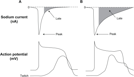 Relation between peak and late sodium current and ventricular action potential (AP) and contraction (tracings are not actual recordings). Panels A and B illustrate a normal and an increased late INa (due to impaired inactivation of Na+ channel), respectively. The enhanced late INa is accompanied by delayed ventricular repolarization (longs APs, and occasional early after depolarization) and abnormal twitch (contraction composed of a phasic and tonic component.) Belardinelli L, Antzelevitch C, Fraser H. Inhibition of late (sustained/persistent) sodium current: a potential drug target to reduce intracellular sodium-dependent calcium overload and its detrimental effects on cardiomyocyte function. Eur Heart J. 2004;6(Suppl I):13–17.11 By permission Oxford University Press, copyright © 2004.