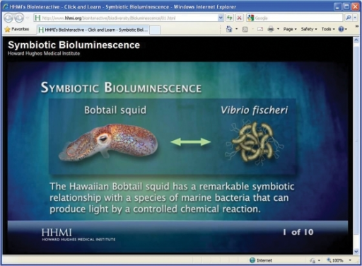 The Hawaiian bobtail squid has a symbiotic relationship with a bioluminescent bacterium.