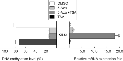 Treatment with 5-Aza and TSA reverses DNA methylation and gene expression patterns of MT3.An esophageal adenocarcinoma cell line (OE33) in which the MT3 gene is silenced and the MT3 promoter CpG island was highly methylated, were treated with 5-Aza and TSA as described in the Methods section. DNA methylation level was determined by Pyrosequencing in Region 2 (from −127 to −8). MT3 gene mRNA expression level was determined by real-time RT-PCR and normalized to HPRT to generate a relative fold induction. The 5-Aza treatment alone led to the induction of relative expression from 0.01 fold to 1.1 whereas the combination of 5-Aza and TSA led to an increase to 17.8.