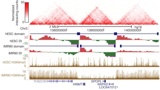Topological boundaries can act as barriers for spreading of heterochromatin. The 2D heat map shows the Hi-C interaction frequency in human ES cells. Underneath is indicated the directionality index (DI) in hESCs and IMR90 cells. The DI is a Hi-C measure showing a site's preference to engage in unidirectional contacts with downstream (red) or upstream (green) sequences. Borders of the topological domains are defined by a change in the directionality of interactions (transition from green to red). The UCSC Genome Browser shots show the distribution of H3K9me3, a measure for heterochromatin formation. Note that in IMR90 cells heterochromatin stops at the topological boundaries. Reprinted by permission from Macmillan Publishers Ltd (Dixon et al., 2012), copyright (2012).