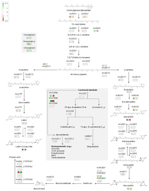 pathway analysis of the carotenoid biosynthetic and cat open i