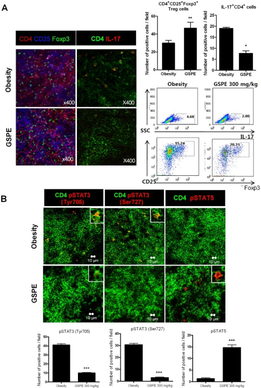 Reciprocal effects of GSPE on Th17 and Foxp3+ Treg cells population in obesity induced by a HFD.(A) Spleen tissues from each mouse were stained for CD4+CD25+Foxp3+ Treg cells and CD4+IL-17+ Th17 cells using monoclonal antibodies against CD4 (red), CD25 (blue), and Foxp3 (green) (left image) or CD4 (green) and IL-17 (red) (right image) (original magnification, 400×). Each confocal image is representative of five fields of view and three separate experiments. CD4+CD25+Foxp3+ T cells and CD4+IL-17+ T cells were enumerated visually at higher magnification (projected on a screen) by four individuals, and the mean values are presented in the form of a histogram (right upper panel). The populations of Th17 and Treg cells in spleens of each group of mice were determined by flow cytometry (right lower panel). *P<0.05, **P<0.01 versus the control group. (B) Spleens from mice in each group were examined by immunofluorescence staining with monoclonal antibodies against CD4 (green) and pSTAT3Tyr705 (red) (left image), or CD4 (green) and pSTAT3Ser727 (red) (middle image), or CD4 (green) and pSTAT5 (red) (right image). The cell populations were analyzed using laser confocal microscopy (original magnification, 400×). The graphs show the number of positive cells (lower panel). Values are the means ± SD. ***P<0.001 compared to the control mice.
