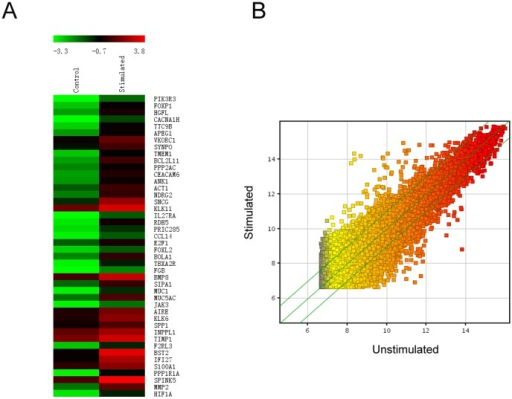 DNA microarray analysis of PECs stimulated by IL-17A.Shown are the heatmap of genes upregulated in stimulated PECs (A) and the scatter-plot for stimulated vs unstimulated PECs (B).