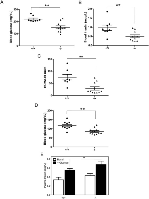PTPRT KO mice have less insulin resistance than wild type mice after  high-fat diet