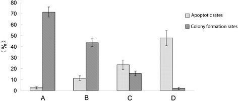 Apoptosis and colony formation under the combined treatment of erlotinib(20 nM) and 6 Gy radiation. (A) Control group: the apoptotic rate was 2.43 ± 1.03%; the colony formation rate was 71.45 ± 4.64%. (B) Erlotinib group: the apoptotic rate was 11.26 ± 2.14%; the colony formation rate was 43.56 ± 3.38%. (C) Radiation group: the apoptotic rate was 23.45 ± 4.35%; the colony formation rate was 15.6 ± 2.26%. (D) combined treatment with erlotinib and radiation group: the apoptotic rate was 47.68 ± 6.73%; the colony formation rate was 2.04 ± 1.02%.