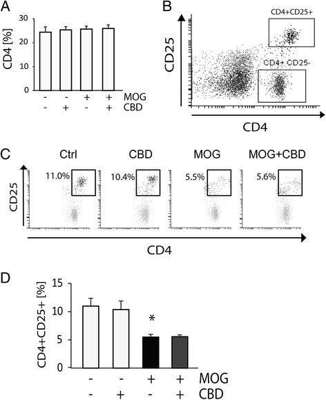 Decrease in CD4+CD25+cells in MOG35-55-stimulated APC/TMOGco-cultures is not affected by CBD. Splenocytes (including accessory CD4+ T cells) were co-cultured with TMOG cells and stimulated with MOG35-55 at 5 μg/ml. CBD at 5 μM was added to the cells immediately before MOG35-55. (A) Bar graph showing the average percentage of CD4+ cells in APC/TMOG co-cultures (100% as equal to total number of cells). Neither treatment affected overall CD4+ T cell number; (B) dot plot histogram presenting CD4+ T cells in APC/TMOG co-cultures positive and negative for CD25 expression; (C) a representative dot plot showing the changes in CD4+CD25+ T cell population in control or MOG35-55-treated APC/TMOG co-cultures in the presence or absence of CBD; (D) bar graph showing the number of cells positive for CD4 and CD25 ± SEM. ANOVA F(3,8) = 7.8, P < 0.01. *P < 0.05 vs non-stimulated cells. n = 3 to 4.