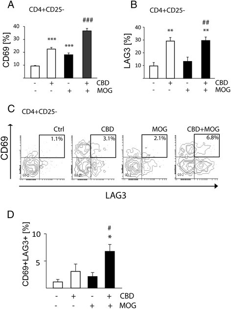 CBD treatment results in upregulation of CD69 and of LAG3 regulatory molecules on CD4+CD25−T cells in MOG35-55-stimulated APC/TMOGco-cultures. APC/TMOG co-cultures were treated with MOG35-55 and CBD. (A) Percentage of CD4+CD25− T cells expressing CD69 (ANOVA F(3,12) = 68.9; P < 0.001); (B) percentage of CD4+CD25− T cells expressing LAG3 (ANOVA F(3,12) = 13.0, P < 0.001); (C) the representative contour plot density graphs showing the co-expression of CD69 and LAG3 in the CD4+CD25− subpopulation; (D) percentage of CD4+CD25− cells expressing both CD69 and LAG3 ± SEM. ANOVA F(3,7) = 7.3, P < 0.05. *P < 0.05, **P < 0.01, ***P < 0.001 vs non-stimulated cells; #P < 0.05, ##P < 0.01, ###P < 0.001 vs MOG35-55-stimulated cells. n = 3 to 4.