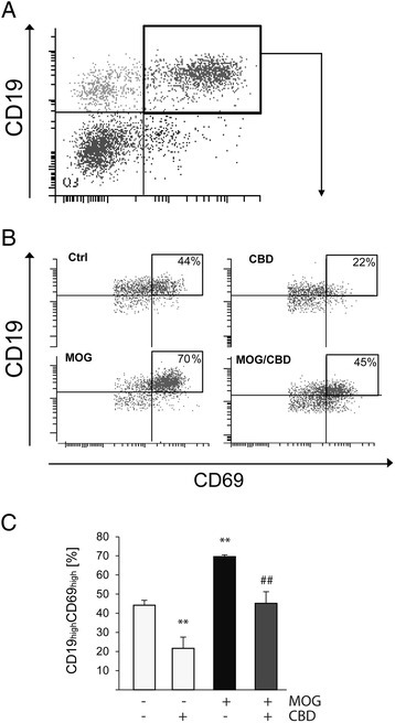 MOG35-55 increases and CBD decreases the number of CD19+CD69+B cells in APC/TMOGco-cultures. APC/TMOG co-cultures were examined for CD19+CD69+ cells using flow cytometry. (A) Dot plot graph showing gating for CD19+CD69+ cells; (B) representative dot plots showing flow cytometry analysis of CD69 expression on CD19+ B cells with a quadrant marking CD19highCD69high cells; (C) bar graph showing the mean percentages ± SEM of CD19highCD69high within CD19+CD69+ parent population (equivalent to 100%). ANOVA F(3,8) = 19.3, P < 0.001. **P < 0.01 vs control, ##P < 0.01 vs MOG-stimulated cells. n = 3.