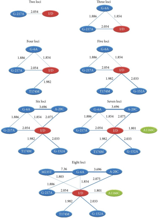 Epistasis networks of the best 2- to 8-locus models for SNP-SNP interaction are associated with hypertension. Significant gene-gene interactions (P < 0.05) in these multifoci models are connected by blue lines, and the strength of interaction is labeled with OR values. The thicker and thinner lines represent the higher and lower interactions, respectively.