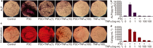 Potency of the inflammatory response negatively regulates and overrules TLR2-induced osteogenic functions. Three-dimensional osteoblasts cultured in collagen gel cultures were stimulated for one week with either 1 μg⋅mL−1 of P3C along with 0–100 ng⋅mL−1 of TNF-α (a–d). Regulation of ALP was determined through histochemical (a) and biochemical (b) methods. In vitro mineralization and calcium deposition was analyzed by histochemical (c) and biochemical (d) methods. All analyses were performed in triplicate and images were captured at ×1 magnification. When stimulated with TNF-α, a dose-dependent downmodulation of ALP expression and Ca deposition that is induced by P3C is shown. *P≤0.001, t-test.