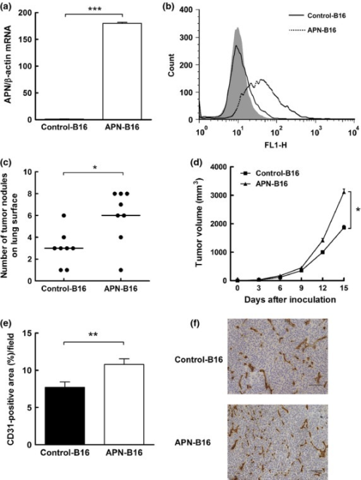 Effects of human APN/CD13 expression in murine B16-F1 melanoma cells. (a) Expression levels of human APN/CD13 mRNA in control-B16 and APN-B16 cells were evaluated by quantitative real-time PCR. (b) Expression levels of APN/CD13 on the surface of control-B16 and APN-B16 cells were assessed by flow cytometry. Data (a) represent the mean (± SEM) of triplicate samples. $$$P < 0.001. (c) Comparison of the numbers of lung surface nodules in the tail vein metastasis model between control-B16 and APN-B16 cells. The numbers of lung surface nodules in mice were counted 21 days after injection of control-B16 and APN-B16 cells. Each bar represents the mean number of nodules for eight mice per group. $P < 0.05. (d) Comparison of tumor volumes in a subcutaneous tumor model for tumors derived from control-B16 and APN-B16 cells. The sizes of subcutaneous tumors were measured twice a week for 2 weeks after inoculation of control-B16 and APN-B16 cells. The data represent the mean (± SEM) for eight mice per group. $P < 0.05. (e) Evaluation of angiogenesis in subcutaneous tumors derived from control-B16 and APN-B16 cells. The area containing CD31-positive vessels was measured. Data represent the means (± SEM) from eight mice per group. $$P < 0.01. (f) Immunohistochemical staining for CD31 in a subcutaneous tumor. Scale bar, 100 μm.