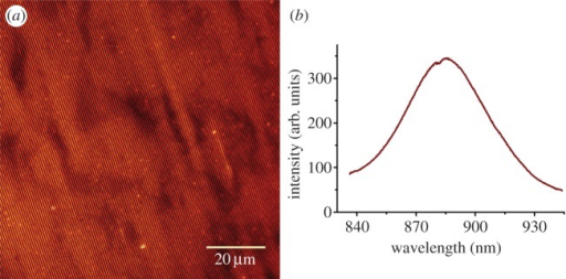 Spectroscopic characterization of RC-LH1-PufX complexes immobilized on Ni2+–NTA lines patterned by IL on gold substrates. (a) False colour fluorescence image. (b) The fluorescence emission spectrum recorded on immobilized complexes.