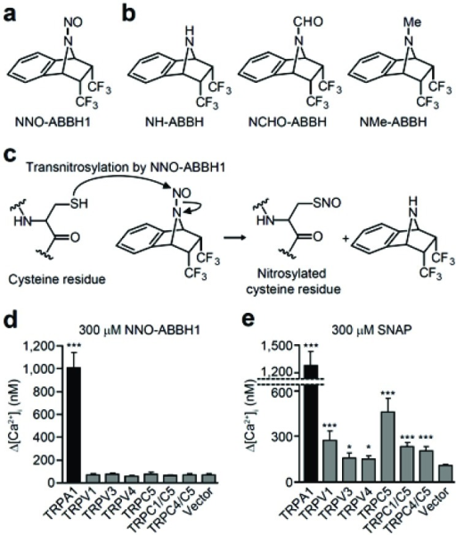 Selective S-nitrosylation of human TRPA1 by a novel N-nitrosamine. Chemical structures of NNO-ABBH1 (a) and nonelectrophilicanalogs (b). (c) The chemical mechanism underlying the transnitrosylating action of NNO-ABBH1 on protein thiol group. (d)Intracellular Ca2+ concentration ([Ca2+]i) measurements using fura-2. Maximum rises in [Ca2+]i (∆ [Ca2+]i) evoked by 300 µM NNO-ABBH1in HEK 293T cells expressing TRPA1, TRPV1, TRPV3, TRPV4, TRPC5, TRPC1/TRPC5, TRPC4/TRPC5, or vector. (n = 47–107). ***P < 0.001 compared to vector. (e) ∆ [Ca2+]i evoked by 300 µM SNAP in HEK 293T cells expressing TRPA1, TRPV1, TRPV3, TRPV4, TRPC5, TRPC1/TRPC5, TRPC4/TRPC5, or vector (n = 22–111). *P < 0.05 and ***P < 0.001 compared to vector. Reproduced from Fig. 1 of [76]with permission.