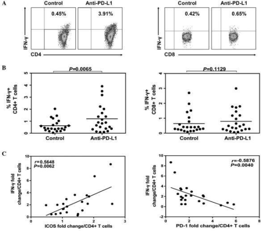 IFN-γ expression of CD4 T cells following PD-1 blockade. Peripheral blood mononuclear cells derived from HLA-A2+ CHB patients were isolated and cultured with anti-CD28, IL-2 and HBcAg18-27 peptide for 10 days in present of anti-PD-L1 or isotype control. Cells were harvested, restimulated and stained by intracellular IFN-γ staining. (A) The representative flow cytometric dot plots of IFN-γ levels in CD4+ and CD8+ T cells. (B) Comparing percentage of IFN-γ producing in CD4 or CD8 T cells treated with anti-PD-L1 or isotype antibody. (C) The ability of IFN-γ production was positively correlated with ICOS while inversely correlated with PD-1 expression on CD4 T cells. IFN-, interferon-; CHB, chronic hepatitis B; IL-2, interleukin-2; PD-L1, PD-Ligand 1.