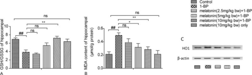Effects of melatonin on 1-bromopropane(1-BP) induced lipid oxidation stress in cerebral cortex of SD rats. Data were shown as mean ± SEM (n = 10). (A) The GSH/GSSG ratio of cerebral cortex in SD rats. (B) The malondialdehyde (MDA) measurement of cortex in SD rats. (C)The expression of HO1 was notably upregulated upon exposure to 1-BP and was attenuated by the treatment of melatonin. ∗P < 0.05, ∗∗P < 0.01, nsP > 0.05 versus 1-BP group£»##P < 0.01 versus control group. 1-BP = 1-bromopropane, MDA = malondialdehyde, SD rats = Sprague-Dawley rats.
