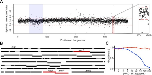 yigM encodes the biotin transporter BioP. (A) Index plot showing the synthetic interaction value of every double deletion mutant resulting from the mating of the bioA strain with the Keio collection. The region between the ilvC and metE genes is highlighted (right panel). (B) The genetic locus between the ilvC and metE genes. The genes that are involved in synthetic sick/lethal interactions with bioA within that locus are shown in red. (C) Effect of the BioA inhibitor MAC13772 on the growth of E. coli strain BW25113 (red) or the kanamycin-resistant yigM mutant (blue) in LB. The growth was normalized to that of LB with no drugs.
