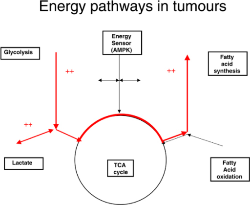 Simplified view of metabolic pathways in tumours. Enhanced pathways are shown as thick lines. Potential inhibitors of glycolysis and lipid synthesis and stimulators of the tricarboxylic acid (TCA) cycle are shown. Calorie restriction would be expected to enhance adenosine monophosphate-related kinase (AMPK) activity, which inhibits lipid synthesis and generally stimulates TCA cycle activity.