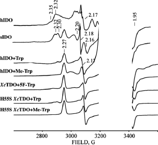 X-band EPR spectra of cryoreduced binary ferrous-oxy hIDO and sIDO complexes and cryoreduced ternary complexes of ferrous-oxy hIDO, XcTDO, and H55S XcTDO with Trp, Me-Trp, and 5F-Trp. Instrument conditions: T = 25 K; microwave power, 2 mW; modulation amplitude, 5 G; microwave frequency, 9.365 GHz.
