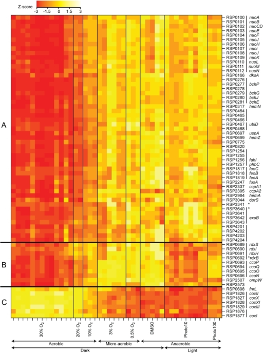 Transcription profile heatmap of members of the FnrL regulon across conditions with varying oxygen tension.The colors represent the relative level of mRNA abundance compared to the mean level of expression for each locus (yellow = high expression, red = low expression). Genes are identified by their locus ID and gene names. Vertical lines next to the locus IDs denote predicted transcription units. Asterisks denote transcription units that had no FnrL ChIP–chip peak detected within their promoter regions but had a sequence matching the FnrL binding site consensus. The amount of oxygen or light in the experimental conditions are indicated below the plot (Photo10 and Photo100 represent illumination of the cultures at 10W/m2 and 100W/m2, respectively). Genes were grouped according to their expression profiles. Group A contains genes whose expression levels negatively correlate with oxygen tension. Group B contains genes whose expression levels also negatively correlate with oxygen tension but with the exception that these genes have relatively low expression under low light conditions (Photo10). Group C contains genes whose expression levels positively correlate with oxygen tension.