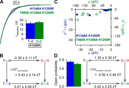The H1348A mutation stabilizes the open state of CFTR in the nonhydrolytic K1250R background. (A) Representative normalized decay time courses of macroscopic currents for H1348A/K1250R and T460S/H1348A/K1250R CFTR after the removal of 2 mM ATP (gray). Solid blue and green lines are fitted exponentials; mean ± SEM relaxation time constants (τrelaxation) are shown in the inset. (B) Thermodynamic mutant cycle for target pair T460-H1348 built on nonhydrolytic closing rates (1/τrelaxation). The top two corners of the mutant cycle were taken from Fig. 5 B. (C) Noise analysis for estimation of Po for H1348A (blue symbols) and T460S/H1348A (green symbols); each symbol represents one patch. (D; left) Mean ± SEM Po for H1348A (blue bar) and T460S/H1348A (green bar). (Right) Thermodynamic mutant cycle for target pair T460-H1348 built on Keq = Po/(1−Po) values under nonhydrolytic conditions. The top two corners of the mutant cycle were taken from Fig. 5 D.