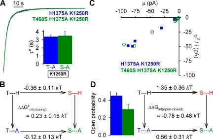 Effects of mutations at positions 460 and 1375 on nonhydrolytic gating in the K1250R background. (A) Representative normalized decay time courses of macroscopic currents for H1375A/K1250R and T460S/H1375A/K1250R CFTR after the removal of 2 mM ATP. Solid blue and green lines are fitted bi-exponentials. Fitted parameters were τ1 = 2.8 s, τ2 = 11 s, A1 = 0.77, and A2 = 0.23 for the H1375A/K1250R trace, and τ1 = 2.8 s, τ2 = 15 s, A1 = 0.82, and A2 = 0.18 for the T460S/H1375A/K1250R trace. Average steady-state burst durations (τ*; inset) were estimated from the two fitted time constants (τ1 and τ2) and their fractional amplitudes (A1 and A2) as τ* = (A1+A2)τ1τ2/(A1τ2+A2τ1). (B) Thermodynamic mutant cycle for target pair T460-H1375 built on average nonhydrolytic closing rates (1/τ*). The top two corners of the mutant cycle were taken from Fig. 5 B. (C) Noise analysis for estimation of Po for H1375A (blue symbols) and T460S/H1375A (green symbols); each symbol represents one patch. (D; left) Mean ± SEM Po for H1375A (blue bar) and T460S/H1375A (green bar). (Right) Thermodynamic mutant cycle for target pair T460-H1375 built on Keq = Po/(1−Po) values under nonhydrolytic conditions. The top two corners of the mutant cycle were taken from Fig. 5 D.