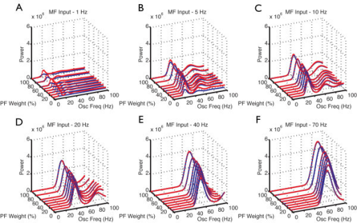 Power spectral frequency of the Golgi cells (GoCs) population spike timing histograms (PSTHs) in the presence of varying mossy fiber (MF) input rates and parallel fiber (PF) synaptic weights. Network responses of the GoC layer with (red) and without gap junctions (blue) between GoCs. Power spectral density for each PF strength and MF input rate (A to F) for the regular network model of length 1.5 mm. X axis: Oscillation frequency (Hz). The y axis = PF synaptic weight (%), z axis = normalized power. MF rate at (A) 1 Hz, (B) 5 Hz, (C) 10 Hz, (D) 20 Hz, (E) 40 Hz, (F) 70 Hz.