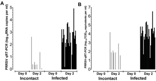 Active replication of PRRSV in infected pigs. Plasma collected from pigs on day 0 (n = 50) (pre-infection) and day 2 post-infection of infected (n = 25) and contact (n = 25) pigs was analyzed to determine the PRRSV titer by quantitative RT-PCR. (A) Results of PRRSV qRT-PCR in each ml of plasma (RNA copies in log10 values) and (B) viral load in plasma in log10 TCID50/ml are shown.