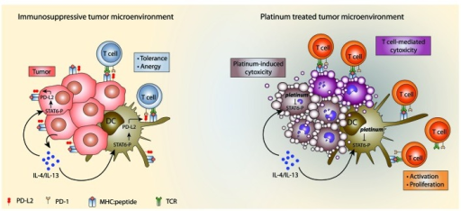 Figure 1. Immune modulation by platinum chemotherapeutics. (A) Immunosuppressive tumor microenvironment. IL-4/IL-13 production by tumor cells and immune cells (not shown) leads to STAT6 phosphorylation in DCs and tumor cells. STAT6 phosphoylation leads to upregulation of PD-L2 expression resulting in immune evasion by induction of T cell tolerance and anergy. (B) Platinum treated tumor microenvironment. Platinum chemotherapeutics have a direct cytotoxic effect and inhibit STAT6 phosphorylation leading to a downregulation of PD-L2 expression. Decreased PD-L2 expression leads to increased activation and proliferation of T cells by DCs and enhanced recognition of tumor cells by T cells.