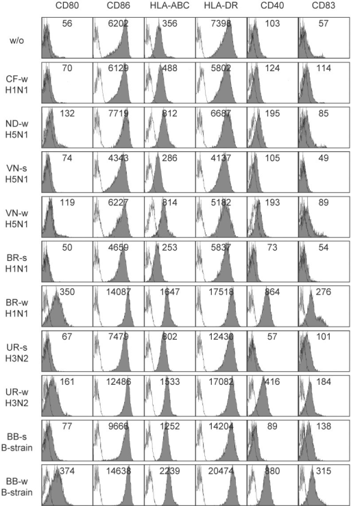 Vaccine-induced DC maturation in healthy donor HD15.Immature DC of donor HD15 were incubated for 48(-like) and seasonal influenza virus vaccines at 10 µg/mL (referring to HA content) and were subsequently analyzed by flow cytometry for expression of maturation markers on viable 7AAD-negative cells (grey histograms). Split virus formulations were unavailable from pandemic (-like) strains A/H1N1-California and A/H5N1-Indonesia. Unfilled histograms represent IgG isotype control stainings. MFI values were added to each histogram. For abbreviations of virus strains see Table 1. s, split virus; w, whole virus; w/o, without.