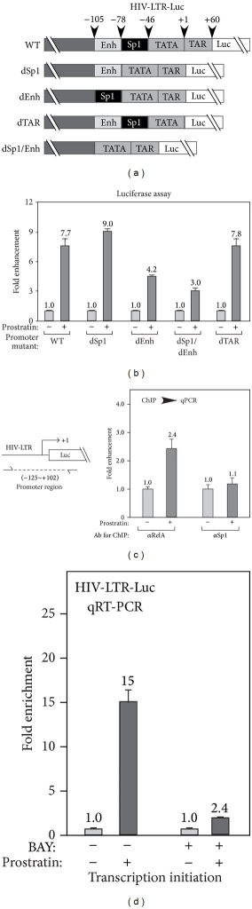 Prostratin-induced HIV-1 transcription depends on NF-κB. (a) Schematics of HIV-1 promoter deletion mutations. dSp1 (without Sp1 binding sites), dEnh (without NF-κB enhancer element), dTAR (without TAR RNA sequences), or dSp1/dEnh (without Sp1 or NF-κB enhancer element). (b) Effect of promoter mutation on prostratin-induced HIV-1 transcription. HeLa cells were transfected with HIV-LTR-Luc reporter constructs containing the indicated promoter deletions, followed by prostratin treatment. The luciferase activities were plotted based on 3 independent experiments, with the level of untreated cells set to 1.0. (c) Effect of prostratin treatment on RelA and Sp1 recruitment to promoter. HIV-LTR-Luc cells were treated with prostratin for 1 hr and subjected to chromatin immunoprecipitation (ChIP) analysis with indicated antibody. The levels of DNA isolated by ChIP were analyzed by quantitative PCR (qPCR) with the primers targeting promoter region of HIV-LTR as indicated on the left and plotted based on 2 independent experiments, with the level of untreated cells set to 1.0. (d) Effect of inhibiting NF-κB signaling on prostratin-stimulated HIV-1 transcription. HIV-LTR-Luc cells were pretreated with inhibitor BAY, followed by prostratin treatment. The luciferase activities were plotted based on 3 independent experiments, with the level of untreated cells set to 1.0.