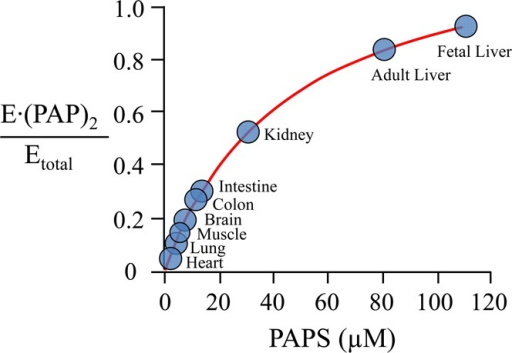 Predicted fraction of E·(PAPS)2 in humantissues.Fractions were calculated using reported PAPS concentrations.24−27