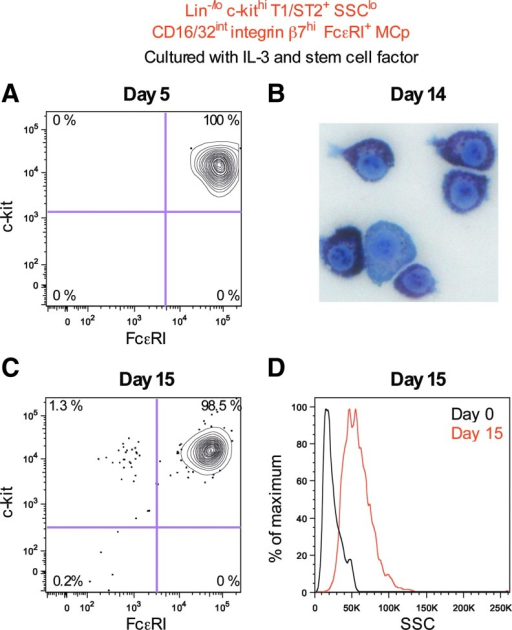 Doubly sorted Lin−/lo c-kithi T1/ST2+ SSClo CD16/32int integrin β7hi FcɛRI+ MCp were cultured with IL-3 and stem cell factor. The cultured cells were analyzed after (A) 5 days, (B) 14 days, and (C, D) 15 days. Flow cytometric analysis was performed in (A, C, D), whereas May-Grünwald Giemsa staining was performed in (B). Primary MCp gated without the use of the SSC light profile (Lin−/lo c-kithi T1/ST2+ CD16/32int integrin β7hi FcɛRI+) were used as day 0 control in (D, black line). The cultured MCp were derived from six naïve mice in (A–D). The day 0 peritoneal MCp gated in (D) were from four naïve mice. The width of the photo in (C) corresponds to 64 μm. Color images available online at www.liebertpub.com/scd