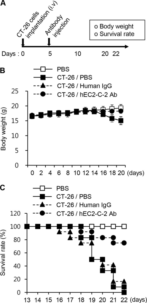 Survival Rate In The Lung Metastasis Mouse Modelct 26 C Open I
