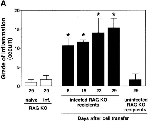 H. hepaticus–infected but not naive RAG KO mice develop intestinal inflammation after reconstitution with CD4+ T cells from IL-10 KO mice. (A) Uninfected or H. hepaticus–infected RAG KO mice were inoculated intravenously with 3 × 105 CD4+ cells from the MLNs of 11-wk infected IL-10 KO mice, and intestinal pathology was analyzed 8, 15, 22, and 29 d later (solid bars). Naive and infected RAG KO animals receiving no cells were analyzed in parallel (open bars). Bars represent mean cecal histology scores ± SD of three or four mice per group. *, P < 0.05 compared with infected mice receiving no cells. (B–D) Histology of ceca of representative sections from the mice shown in A analyzed 29 d after cell transfer: (B) infected RAG KO without cell transfer; (C) infected RAG KO receiving CD4+ cells from infected IL-10 KO mice; or (D) uninfected RAG KO receiving CD4+ cells from infected IL-10 KO mice. Crypt abscesses (solid arrows), ulcer (open arrow). H&E staining. Bar, 200 μm.