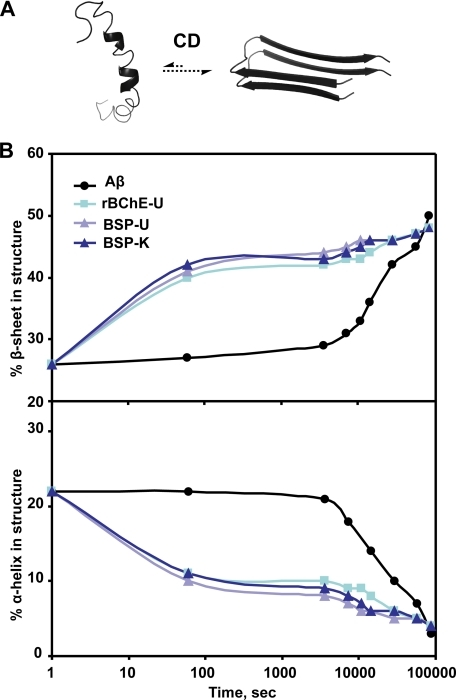 CD evidence for BChE-accelerated conversion to β-sheet conformation. CD deconvoluted spectra demonstrate a rapid increase in β-sheet content (upper plot) and rapid decrease in helical content (lower plot) with the addition of rBChE-U, BSP-U, and BSP-K, as compared with the increase in β-sheet content seen with Aβ alone.