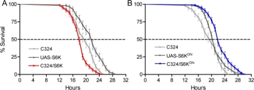 Manipulations of S6 kinase in principal cells alters survival during stress.A. Over expression of S6 Kinase (S6K) in principal cells by the transgene C324/UAS-S6K leads to abbreviated lifespan at desiccation by 10–20% (P<0.001 and P<0.002 to the two controls respectively; Log rank test; n = 106–118 for the different genotypes). B. Expression of a dominant negative form of S6K with C324 driven UAS-S6KDN extends lifespan at desiccation by about 10% (P<0.001 to both controls; n = 107–115).
