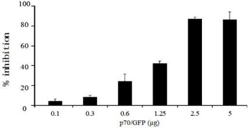 Dose-dependent inhibitory effect of shRNA expression vector p70/GFP. Vero cells were transfected with variant p70/GFP and then infected with GTPV at an MOI of 0.01. 48 h post-infection, total RNA was extracted and subjected to quantitative PCR analysis. Mock-transfected cells were used as controls. The mRNA of beta actin served as an internal reference. Black bars indicate normalized shRNA+ (cells transfected with p70/GFP at six different concentrations ranging from 0.1 to 5.0 μg) GTPV message copies ratios. The data shown represent average from three experiments with the standard deviations indicated by error bars.