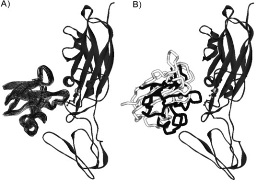 A) Model of the Pc–Cyt f complex obtained withPREs restraints. Cyt f is shown in ribbons and Pc asCα trace. The ten lowest-energy structures are shown. B) Overlayof Pc molecules from the NMR solution structure based on PREs (blackCα trace) and the NMR solution structure based on PCS (PDB ID:1TU2, model 1,[16] lightgray).