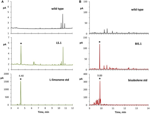 GC–FID analyses of solvent overlay-extracted limonene and bisabolene from transformant strains. (A) Hexane-overlay extraction from the LS transformant (LS.1 line as a representative) showed accumulation of a product that was absent in the wild type, and with a similar retention time (4.40 min) to a commercial l-limonene standard. (B) Dodecane overlay extraction from the BIS transformant (BIS.1 line as a representative) revealed a peak with a similar retention time (9.89 min) to a bisabolene standard, which is absent in the wild type. For these experiments, dodecane was used for bisabolene extraction because of the extended period of time required to accumulate detectable levels of bisabolene, whereas hexane was applied for better limonene peak resolution due to the reverse solvent effect observed with dodecane.