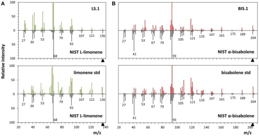 Mass spectra analyses of limonene and α-bisabolene. (A) Comparison of the l-limonene reference spectra from the NIST library with the spectra of the putative l-limonene peak in the LS.1 line (upper panel) and the authentic l-limonene standard (lower panel). (B) α-Bisabolene NIST reference spectra alignment with the putative α-bisabolene peak in the BIS.1 line (upper panel) and a commercial bisabolene standard (lower panel).