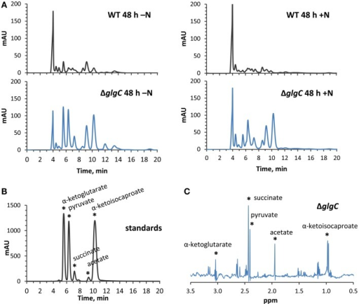 High-performance liquid chromatography and NMR identification of secreted organic acids from ΔglgC. (A) HPLC-generated chromatograms showing the presence of secreted metabolites in ΔglgC, which are absent from the wild type culture media, when grown for 48 h under nitrogen-deplete (left panels) and nitrogen-replete (right panels) conditions. (B) The retention times of the metabolites is shown relative to a mixture of 4 mM α-ketoglutarate, pyruvate, succinate, acetate, and α-ketoisocaproate standards. (C) Proton NMR spectrum of the secreted metabolites in ΔglgC, showing chemical shifts and peak splitting patterns that correspond to α-ketoglutarate, pyruvate, succinate, acetate, and α-ketoisocaproate.
