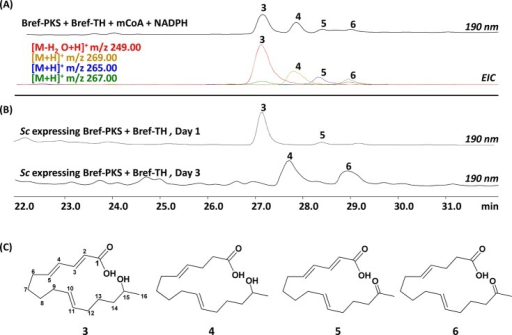 In vitro productsof Bref-PKS and Bref-TH are acyclic octaketideswith variable degrees of β-reduction. (A) HPLC and EIC traceof the in vitro reaction between Bref-PKS and Bref-TH. (B) Production of compounds 3–6 from the S. cerevisiae-NpgA strain co-expressingBref-PKS and Bref-TH. Notice the change in the production profilebetween days 1 and 3. The compounds were purified according to theirpeak production period. (C) Elucidated structures of compounds 3–6 from the corresponding NMR spectra.