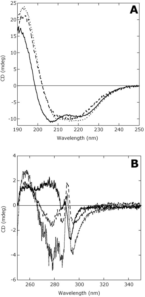 CD spectra of TB10.4 (continuous line), Ag85B (dashed line) and His-full2 (dotted line). A) Far-UV CD spectra (protein concentration: 0.1 mg/mL). B) Near-UV CD spectra (protein concentrations: 0.45, 0.35 and 0.85 mg/mL for TB10.4, Ag85B and His-full2, respectively). All spectra were collected in 10 mM ammonium acetate, pH 7, at 15°C.
