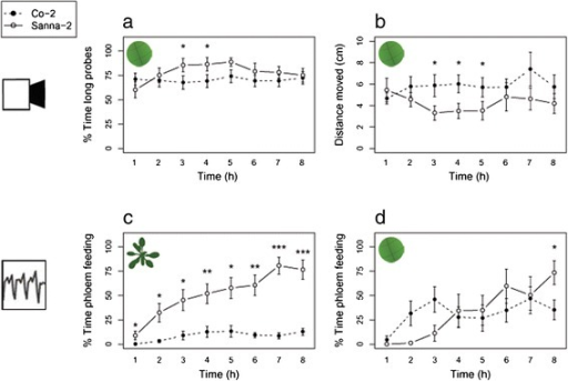 Behavioural parameters ofM. persicaeon two natural Arabidopsis accessions, Co-2 (resistant) and Sanna-2 (susceptible). (a) Percentage of the time spent on long probes (>25 min), and (b) distance moved (cm) were measured by automated video tracking. Percentage of the time spent on phloem feeding (waveform 5) were measured by (c) EPGs on intact plants, and (d) EPGs on leaf discs (Mann–Whitney U test, *P < 0.05; **P < 0.01; ***P < 0.001, video tracking: Co-2 n = 20, Sanna-2 n = 17, EPG recording intact plants: n = 19, EPG recording leaf discs: Co-2 n = 9, Sanna-2 n = 8, error bars represent standard error).