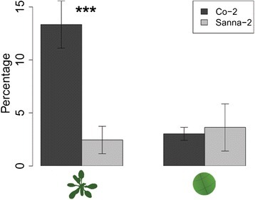 Contribution of salivation to phloem ingestion. Percentage of time spent salivating in the phloem compared to the total phloem phase (salivation + ingestion) of M. persicae aphids on Arabidopsis accessions Co-2 (resistant) and Sanna-2 (susceptible) (Mann–Whitney U test, *P < 0.05; **P < 0.01; ***P < 0.001, left bars: EPG recording intact plants: n = 19, right bars: EPG recording leaf discs: Co-2 n = 9, Sanna-2 n = 8, error bars represent standard error).