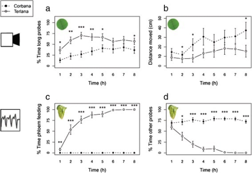 Behavioural parameters ofN. ribisnigrion two lettuce cultivars, Corbana (resistant) and Terlana (susceptible). (a) Percentage of the time spent on long probes (>25 min), and (b) distance moved (cm) were measured by automated video tracking on leaf discs. (c) Percentage of the time spent on phloem feeding (waveform 5), and (d) percentage of time spent on other probes (pathway, phloem salivation and xylem feeding) were measured by EPGs on intact plants (Mann–Whitney U test per time bin, *P < 0.05; **P < 0.01; ***P < 0.001, video tracking: Corbana n = 27, Terlana n = 28, EPG recording: n = 19).
