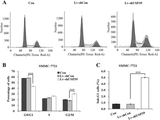 Down-regulation of USP39 impairs cell cycle progression of SMMC-7721 cells. (A) Representative graphs of flow cytometry analysis of SMMC-7721 cell cycle using PI staining. (B) Statistic analysis of percentages of SMMC-7721 cells at different cell cycle stages (G0/G1, S and G2/M). (C) Statistic analysis of percentages of sub-G1 SMMC-7721 cells. ***, P < 0.001.