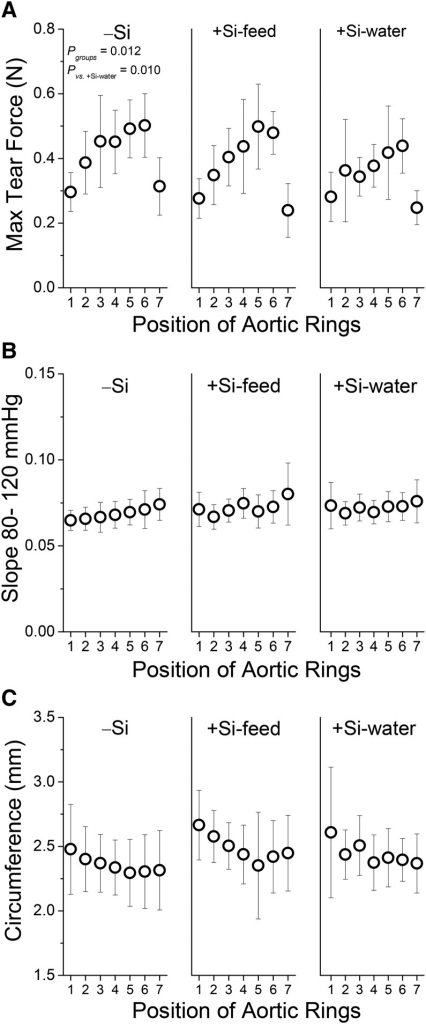 Tensile strength (A), stiffness (B), and initial ring circumference (C) of the aorta of female apoE knockout mice in Study 2 fed a diet high in butter fat and depleted in silicon, compared with mice fed the 2 silicon-replete, high-fat diets: silicon was replete in the feed or the drinking water. Values are shown for each of the 7 aortic rings/positions from each mouse. Values are means ± SDs; n = 10–15 mice/position/group. Stiffness (B) and initial ring circumference (C) profiles were similar for the 3 dietary silicon groups. −Si, silicon-deprived; +Si-feed, silicon-replete in feed; +Si-water, silicon-replete in drinking water.