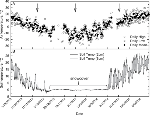 Air and soil temperatures at Elora, Ontario field site, 1 October 2013–25 June 2014. (A) Mean, maximum and minimum air temperature and (B) mean soil temperature. Soil temperatures are an average of thermistors at 2cm and 8cm depth below soil surface across the field plot (n=7 for each depth). Arrows indicate harvest dates for rhizomes and senesced leaves (21 November 2013, 2 February 2014 and 28 April 2014). Air temperature is from the Environment Canada National Climate Data and Information Archive (Environment Canada 2015).